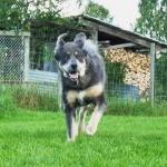 Aquila in running for fun