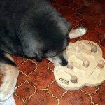 Asti doing tricks