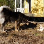 Masi visits Sältet. Aquila checks him up