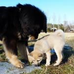 Ok! I will adopt you Masi! says Ruffa