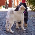 kiss on cheek
