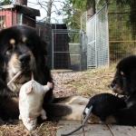 Ruffa shows Yoga how to kill a rat