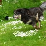 Aquila running like maniac P1220388