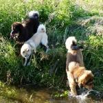 Yoga Masi Disa in the brook P1230443