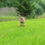 Disa turning herself into a kangaroo