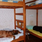 A cottage night for the puppies in Jämtland to go to dogshow