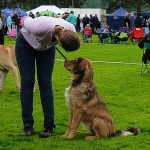 Disa and Maria at dogshow in Svenstavik in August