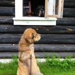 Ransäter outside Zodds cottage