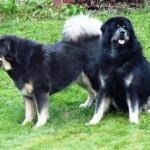 Ricki and Aquila P1290112