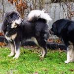 Simus  and Aquila P1290181