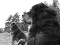 Ozo och Asti