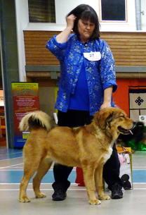 Disa vid Tibethund