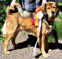 Disa showing her ribbons after Avesta 2014 06 14