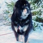 Ruffa on a snowy walk in January