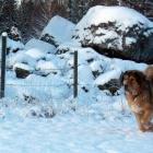 Disa enjoying a snow blast