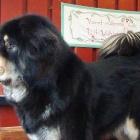 Ruffa 4 years old today