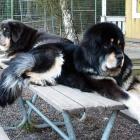 Aquila and Ruffa