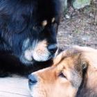 Ruffa gives Disa a kiss