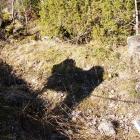 Shadow of Simus