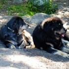 Simus and Aquila P1470376