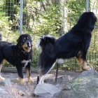 Yoga and Ruffa on guard P1490638