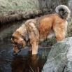 Disa in the brook P1550768