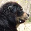 Simus profile close P1550810
