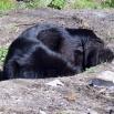 Ruffa preparing her cave P1550855