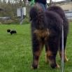 Humla and a dog P1550930