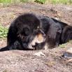 Ruffa preparing her cave P1550857