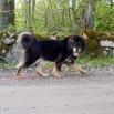 Ruffa P1560484