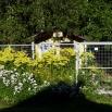 dogsyard P1570858