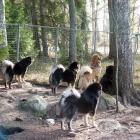 guarding pack P1450247