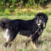 Ruffa P1590048