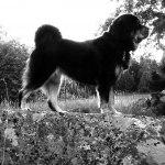 Ruffa1,5 years old