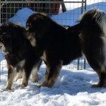 Chiva and Ruffa P1090364