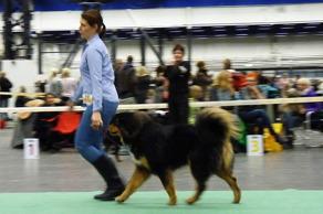 Hund 2015 med Maria i ringen.