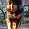 Humla in the sun P1630135
