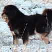 Ruffa cold paw P1630183