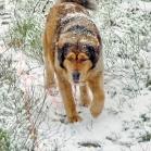 Disa snowstorm P1680865