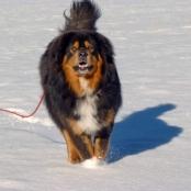 Humla happy  in snowP1690767