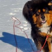 Humla happy in snowP1690764
