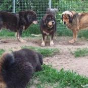 Bacchus at Sältet in dogsyard P1710303