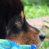 Dogsyard Humla P1720485