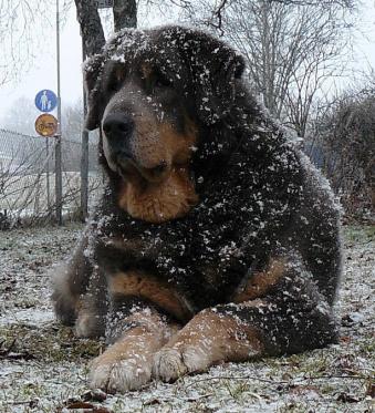 Durettos Snow-Crisp / Asti