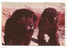 Kipu and Kalu from 1979. Photo R. Eichhorn