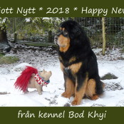 Kennel New Year Card