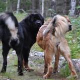 Disa and Taiyang. Foto P Näslund