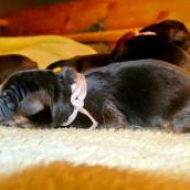 puppy P1000866