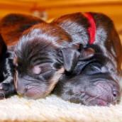 puppy P1000905